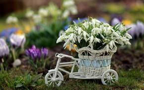 Картинка велосипед, Цветы, Весна, Подснежники