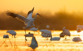Картинка вода, свет, птицы, блики, цапля, журавль