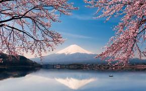 Обои весна, сакура, вода, озеро, Япония, гора Фуджи, лодка, цветы, Фудзияма