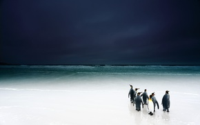 Обои пляж, птицы, небо, пингвины, океан