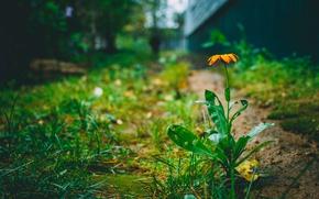 Картинка цветок, лето, природа, тепло