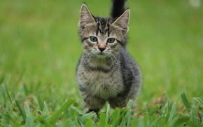 Картинка трава, глаза, котенок
