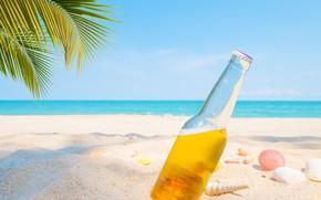 Картинка песок, море, пляж, лето, пальмы, отдых, пиво, ракушки, summer, beach, каникулы, sea, sand, beer, paradise, …