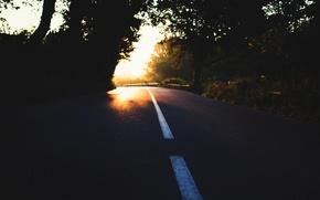 Картинка дорога, свет, деревья, природа