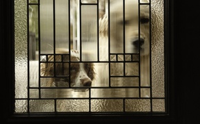 Обои собаки, дом, дверь
