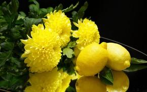 Картинка цветы, лимон, цитрус, хризантемы