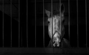 Картинка фон, конь, дверь