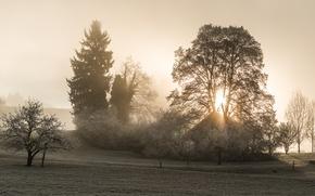 Картинка свет, туман, дом, утро