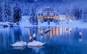 Обои зима, снег, деревья, птицы, озеро, дом, ели, Альпы, Италия, лебеди, леса