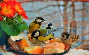 Картинка Цветочки, Birds, Птички