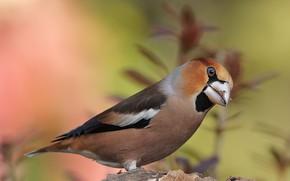 Картинка взгляд, фон, птица