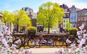 Обои весна, река, цветение, buildings, canal, Амстердам, Netherlands, blossom, old, Amsterdam, spring, мост, bridge, велосипед, flowers
