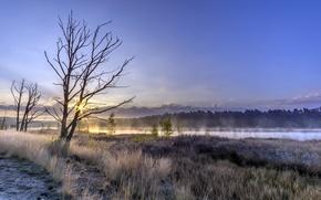 Картинка туман, река, дерево, утро