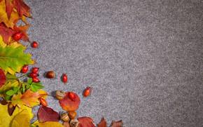 Обои листья, фон, желуди, осень, шиповник