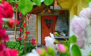 Картинка Цветы, Дом, Дверь, Двор