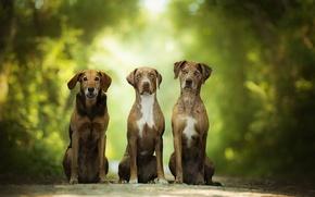 Картинка зелень, собаки, три, боке