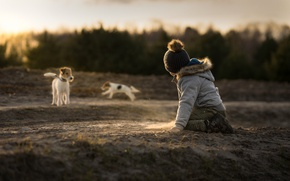 Картинка песок, собаки, ребёнок