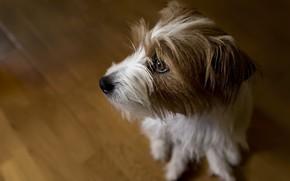 Картинка собака, дом, друг
