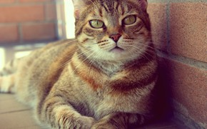 Картинка кошка, усы, стена