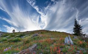 Картинка небо, цветы, гора