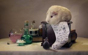 Картинка мышь, морская свинка, формулы, химия