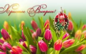 Картинка цветы, праздник, яйцо, Пасха, тюльпаны
