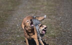 Картинка собаки, пара, взбудораженные