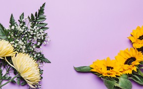 Картинка цветы, подсолнух, хризантемы