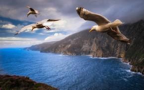 Обои пейзаж, небо, трио, три птицы, полет, берега, Джонатан Ливингстон, природа, крылья, тучи, чайки, облака, скалы, ...