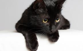 Картинка кот, чёрная, мордочка, кошка