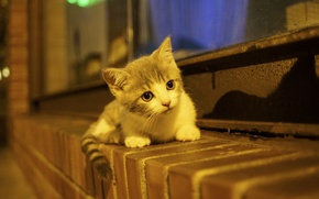 Картинка малыш, котёнок, на подоконнике