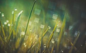 Обои трава, блики, роса, утро, макро, боке