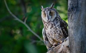 Картинка лес, глаза, сова, птица