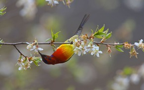 Картинка цветы, птица, ветка, клюв, нектарница
