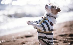 Картинка друг, собака, стойка