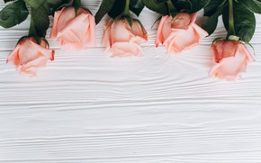 Картинка цветы, Розы, Бутоны, фон