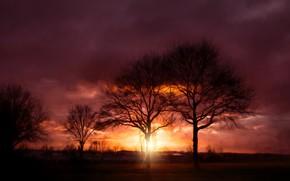 Обои закат, лучи, деревья