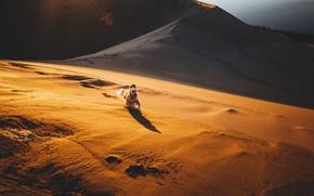 Картинка песок, пустыня, собака