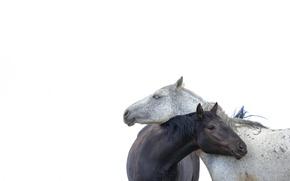 Картинка минимализм, лошади, белый фон, парочка