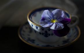 Картинка фон, чашка, цветок