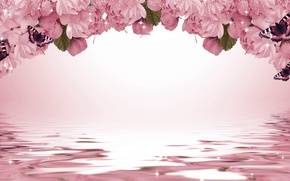 Картинка бабочки, цветы, фон, сакура, искры