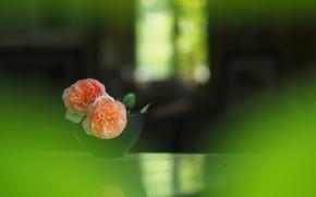 Обои бутоны, wallpaper, чайная роза, размытость, боке, ваза