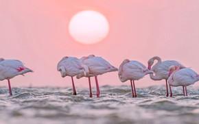 Картинка вода, птицы, Солнце, Африка, фламинго, Намибия