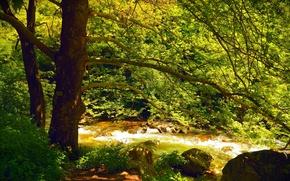 Картинка Поток, Весна, Деревья, Лес, Nature, Речка, Spring, River, Forest, Trees, Flow