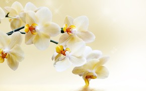 Картинка цветы, ветка, орхидея