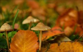 Картинка Осень, Листья, Грибы, Autumn, Боке, Bokeh, Leaves, Mushrooms