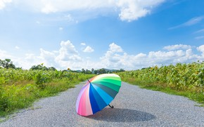Картинка дорога, лето, парк, радуга, зонт, colorful, rainbow, summer, umbrella