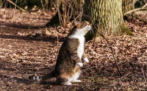 Обои природа, фон, кошка