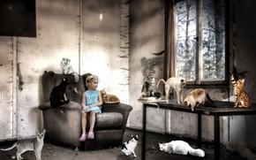 Картинка кошки, фон, девочка