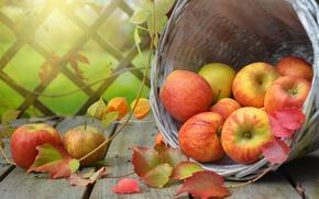 Обои яблоки, корзина, физалис, фрукты, доски, листья, ветки, плоды